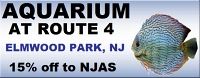 aquarium at route 4