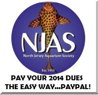 Pay your dues with Paypal!